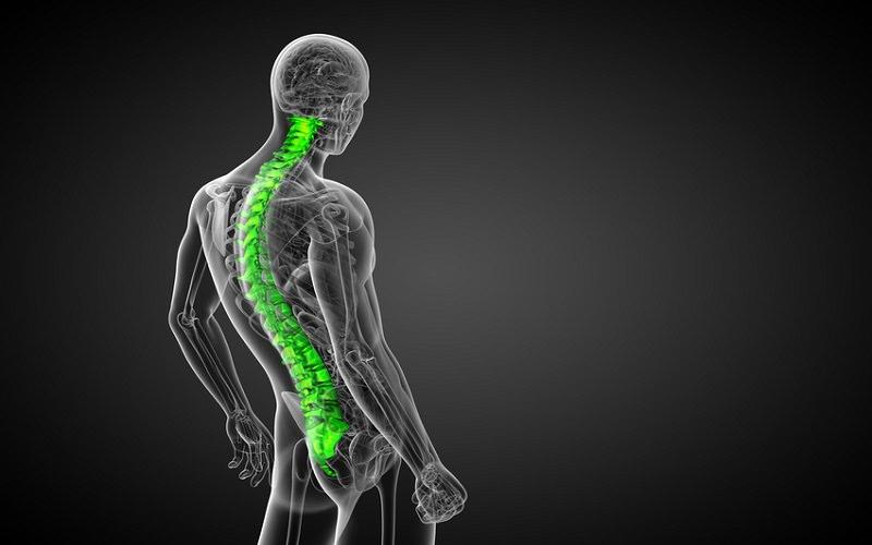 La colonne vertébrale démarre au milieu du dos et contient la moelle épinière, une sorte d'autoroute pour les nerfs qui permet de connecter votre cerveau à chaque tissu de votre corps.