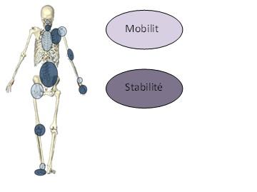 mobilité et stabilité