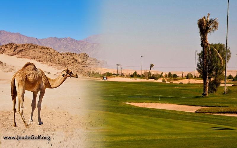 golf en Arable Saoudite