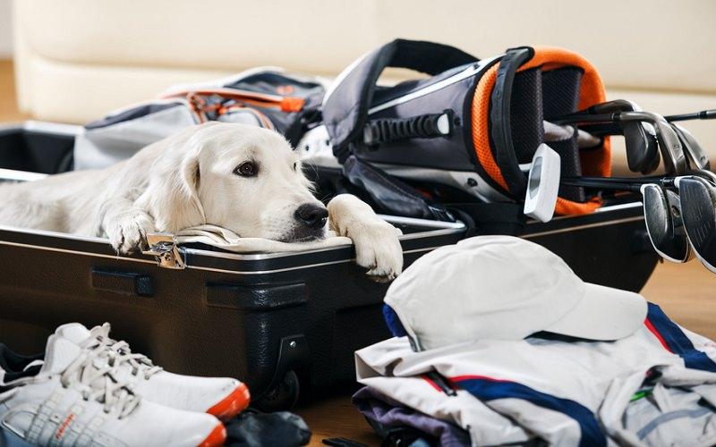 Voyages golfiques : transporter ou louer ses clubs de golf ?