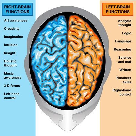 Pour un meilleur swing éduquez votre éducation cerveau gauche/cerveau droit !